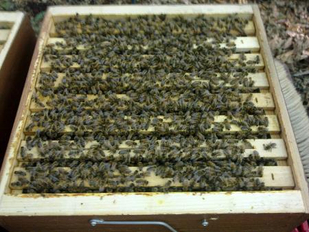 bienen online shop pollenfalle